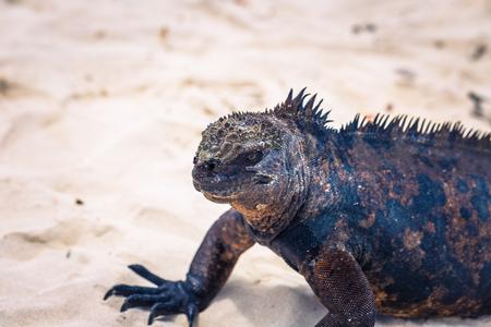 加拉帕戈斯群岛- 8月23日加拉帕戈斯群岛厄瓜多尔圣克鲁斯岛托尔图加